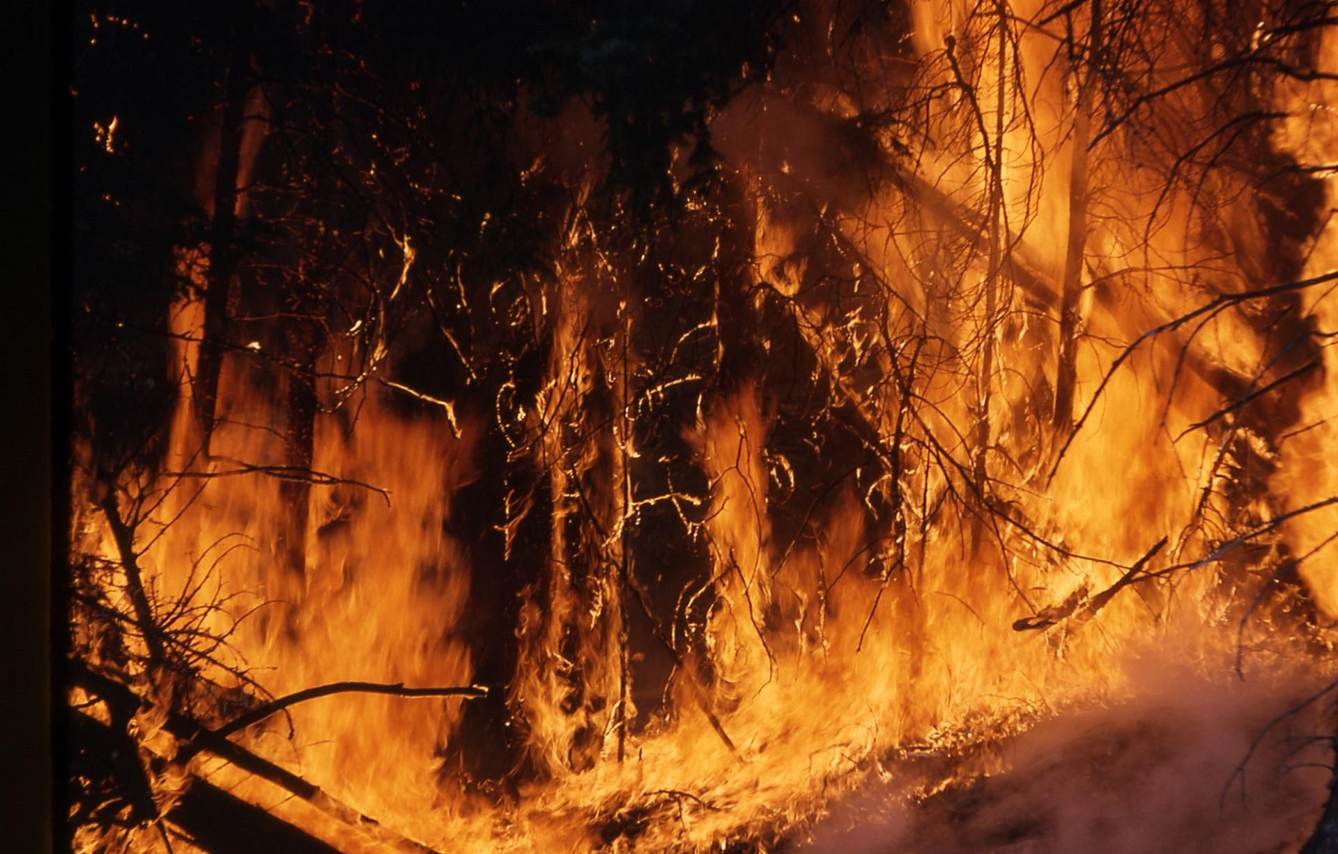 热点快评:加州山火肆虐 AI能成美国政府救星?